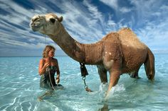Picture of Robyn Davidson - After walking almost miles across the heart of the Australian Outback, Davidson and her camels arrived at the Indian Ocean. Never having seen a body of water larger than a puddle before, her camels were mesmerized. Robyn Davidson, National Geographic Photographers, Epic 2, Mundo Animal, Fauna, Mammals, Thing 1, Journey, Ocean