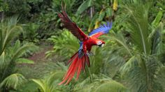 macaws wallpapers - Google Search