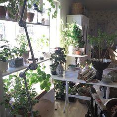 Nå flommer det over av planter her. De skal jo ut. Men der er fortsatt for kaldt. Brrrr men sol og fint i dag #myhome #hjemmehosmeg #interiør #gjenbruk #gamleting #vintageinteriør #brocante #jeannedearcliving #boligdrøm #levlandlig #fransklandstil by wallas_vintage