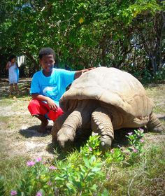 Giant Aldabran tortoise; one of the more than fifty tortoises on Cousin Island Special Reserve