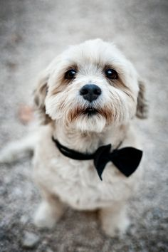 """Lovely #wedding [""""I want a kitten, [now]! I want a kitten, right [now]. Grant [me] a kitten. I want a beau-t-iful kit-ten. [Know], your place. And it is not in my [house]! Bow [down]! There's a dog- bow, [wow-wow] -meow-MEOW! cat."""" -Asha] ***i have planned names for animals as well. [There is, meow-MEOW!-cat, and Dolly Bar-Bar; then there is to be Chinese Cheesecake, and Pumpernickel. The last one is to be named Astrid.] *VALENTINO has like six pubs!"""