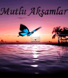 Animated Gif, Surfboard, Animation, Allah, Quotes, Canoe, Quotations, God, Animation Movies