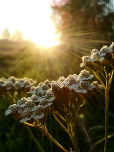 Photo flower