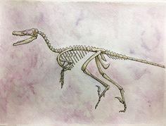 velociraptor skeleton watercolour