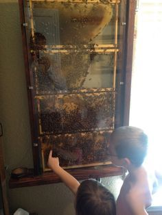 DIY Observation Hive | Cheap Beekeeping ~ We have an observation hive in our house and the kids LOVE it