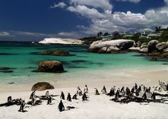 Our Favorite Beachy Destinations For a Relaxed Honeymoon Experience Two Oceans Meet, Boulder Beach, Cape Town South Africa, Beaches In The World, Most Beautiful Cities, Honeymoon Destinations, Beach Fun, Vacation Spots, Vacation Ideas