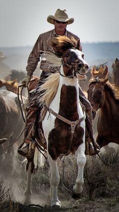 Oh I love those cowboys Rodeo Cowboys, Hot Cowboys, Real Cowboys, Cowboys And Indians, Cowboy Love, Cowgirl And Horse, Cowboy And Cowgirl, Horse Riding, Pretty Horses