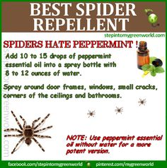 ☛ SPIDERS HATE Peppermint Oil:  THIS IS BY FAR THE BEST SPIDER REPELLENT!  http://www.stepintomygreenworld.com/greenliving/around-the-home/spider-repellent-recipe/  ✒ Share | Like | Re-pin | Comment