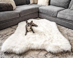 Treat A Dog's extra large, mid-century modern orthopedic dog bed doubles as an attractive memory foam area rug. This ultra soft polar bear faux fur dog bed matches pet comfort with home design. Giant Dog Beds, Pet Beds, Doggie Beds, Best Orthopedic Dog Bed, Animal Print Bedding, Faux Fur Bedding, Dog Shop, Plush Animals, Polar Bear