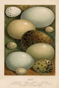 Antique Bird Egg Print