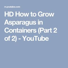 HD How to Grow Asparagus in Containers (Part 2 of 2) - YouTube