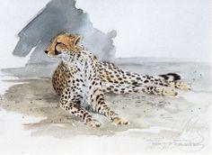 """""""Estudio del guepardo"""" 8 """"x 11"""" de la acuarela  por Morten E Solberg Sr  En 1992 tuve el honor de ser uno de los 5 artista elegido para representar a Estados Unidos en un intercambio cultural con Sudáfrica. Si bien no he tenido la increíble oportunidad de ver a estos animales en su hábitat natural. Este es uno de los bocetos completé mientras esté allí."""