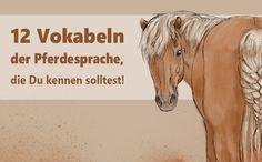 Wenn Du eine gute Beziehung zu Deinem Pferd möchtest, dann musst Du verstehen, was es Dir sagen will. Deshalb geht es in diesem Artikel um die Pferdesprache