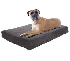 Pet Support Systems Washable Orthopedic Memory Foam Dog Bed, Large, 46-Inch x 28-Inch x 4-Inch, Grey Charcoal * Check this awesome image (This is an affiliate link and I receive a commission for the sales) : Dog beds