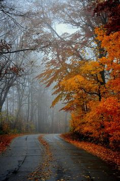 A quiet road a cool misty Fall afternoongreat for country drives looking f Schöne Naturbilder Composition Photo, Autumn Scenes, Autumn Aesthetic, Fall Pictures, Autumn Leaves, Autumn Rain, Autumn Cozy, Late Autumn, Fallen Leaves