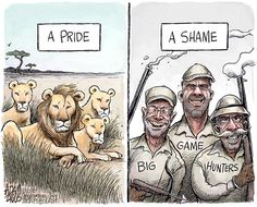 Cecil the lion © Adam Zyglis,The Buffalo News,cecil, lion, minnesota, dentist, big game, hunter, trophy, africa, walter palmer, kill, wildlife, pride, animals