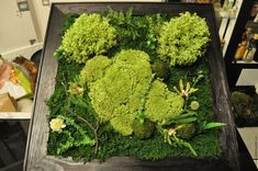Похожее изображение Herbs, Photo And Video, Image, Instagram, Home Decor, Decoration Home, Room Decor, Herb, Home Interior Design