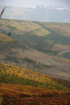 Per San Martino le pere al vino | Honest Cooking Italia