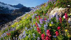 Mount Rainier, National Park Washington, USA