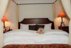 The Hermosa Inn, Paradise Valley, AZ, a LuxuryPAW (luxury pet-friendly Inn) Memb… – Eve M – pet resort