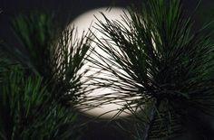 Así se ha visto la 'Superluna' en el mundo  . 23 junio 2013