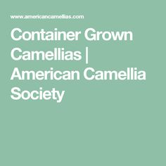 Container Grown Camellias | American Camellia Society