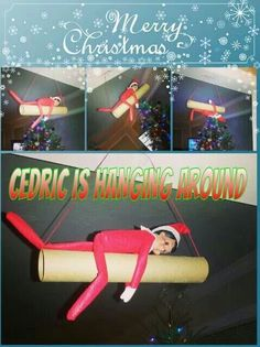 What the E.L.F.? Cedric is hanging around! Happy ELFMAS!