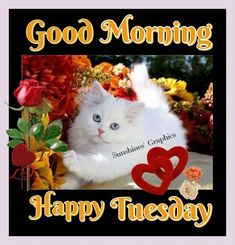 Tuesday Good Morning days of the week good morning tuesday happy tuesday tuesday greeting tuesday quote tuesday blessings good morning tuesday Good Morning Happy Thursday, Good Morning Sister, Good Morning Happy Sunday, Good Morning Sunshine, Good Morning Good Night, Morning Wish, Tuesday Morning, Happy Wednesday Pictures, Happy Tuesday Quotes