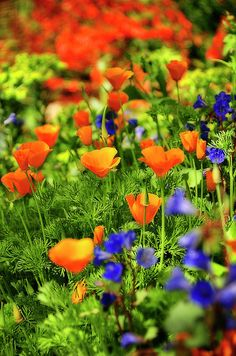 Arizona wildflowers ▬ Please visit my Facebook page at: www.facebook.com/jolly.ollie.77