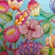 Tropical Wonderland – Page 2 – Millie Marotta