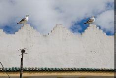 Fotografie Matthias Schneider 160321 25758 Essaouira 2 Moewen