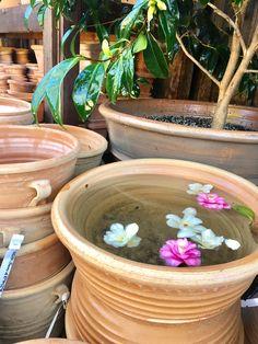Greek Terracotta Pot. This Greek terra cotta pot is giving us fountain ideas...