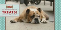 so cute for the pet's holiday card! Mixbook Dog Treats Holiday Photo Cards