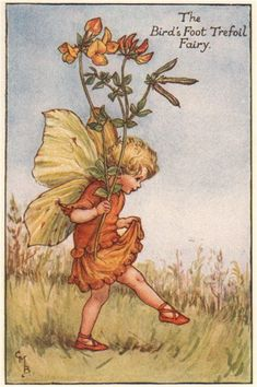 FLOWER FAIRIES/BOTANICALS: The Bird's Foot Trefoil Fairy; This is an original vintage Cicely Mary Barker Flower fairies colour print. It is not a modern reproduction, c1935; approximate size 11.0 x 7.0cm, 4.25 x 2.75 inches