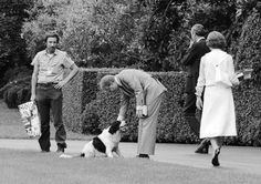 Jimmy and Rosalynn Carter play with their dog Grits after returning to the White House from church in 1978. President Carter's daughter Amy also had a Siamese cat named Misty Malarky Ying Yang.