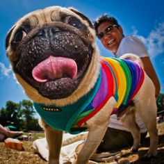 ...so says PRIDE PUG, the almighty squish face of rainbow cuteness... homosexuality exists outside of humans.