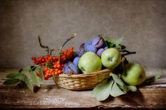 #fruit in #still #life #photography • Ripened Plums Print By Nikolay Panov
