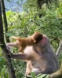 Mother's love is universal - Tiere - Animals Wild Cute Little Animals, Cute Funny Animals, Mother And Baby Animals, Cute Animal Videos, Funny Animal Pictures, Nature Animals, Animals And Pets, Wild Animals, Primates