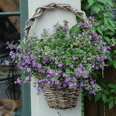 wall or door basket.