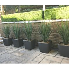 Artificial Green Pandanus set in large Lechuza Quadro Planters. Plants Around Pool, Landscaping Around Pool, Outside Plants, Landscaping Plants, Outdoor Landscaping, Outdoor Decor, Large Fake Plants, Fake Plants Decor, Backyard Plants