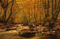 Autumn colours by Master Pedda, via Flickr