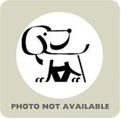 Richmond, VA - Hound (Unknown Type) Mix. Meet Brandy, a dog for adoption. http://www.adoptapet.com/pet/11863033-richmond-virginia-hound-unknown-type-mix