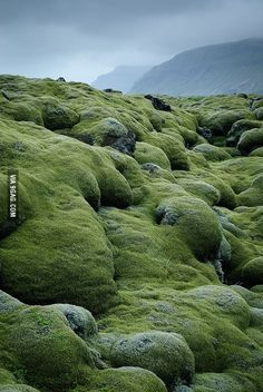 I first thought about a trip to Iceland with my friend last year. Now I see Iceland pictures and info everywhere. Lava fields covered with moss in Vestur-Skaftafellssysla, Iceland All Nature, Amazing Nature, Places To Travel, Places To See, Beautiful World, Beautiful Places, Iceland Travel, Belleza Natural, To Infinity And Beyond