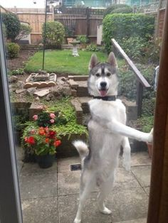 And this one who will let you out. | 23 Dogs Who've Out-Dogged Themselves