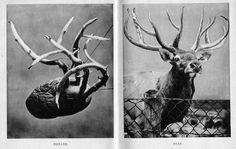 Inventions, Giraffe, Moose Art, England, History, Modern, Fun, Photos, Animals