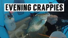 Crappies were tight lipped but I managed to pull few from the pack. White/Pink tungsten glow jig, tipped with a white trigger x mustache worm did the trick. Walleye Fishing, Carp Fishing, Ice Fishing, Fishing Tips, Fishing Tackle, Fishing Quotes, Fishing T Shirts, Wedding Art, Man Humor