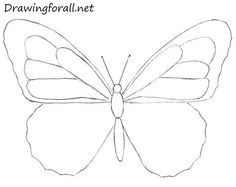 13 Best How To Draw Butterflies Images Drawing Tutorials