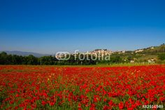 Field of red poppies in Spello, Umbria. #Spello #Umbria #Poppy #Poppies #Landscape #Rural #Village #Agriculture #Nature #Ambient #Spring #Italy #Travel #Tourism #Medieval