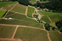 Arcus Estate: Our 39 acre Pinot Noir vineyard in the Dundee Hills originally planted in 1973
