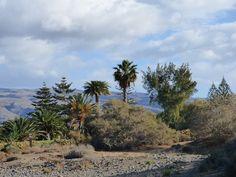 Desde las Islas Canarias  ..Fotografias  : Palmeral en las Dunas de Maspalomas Gran Canaria